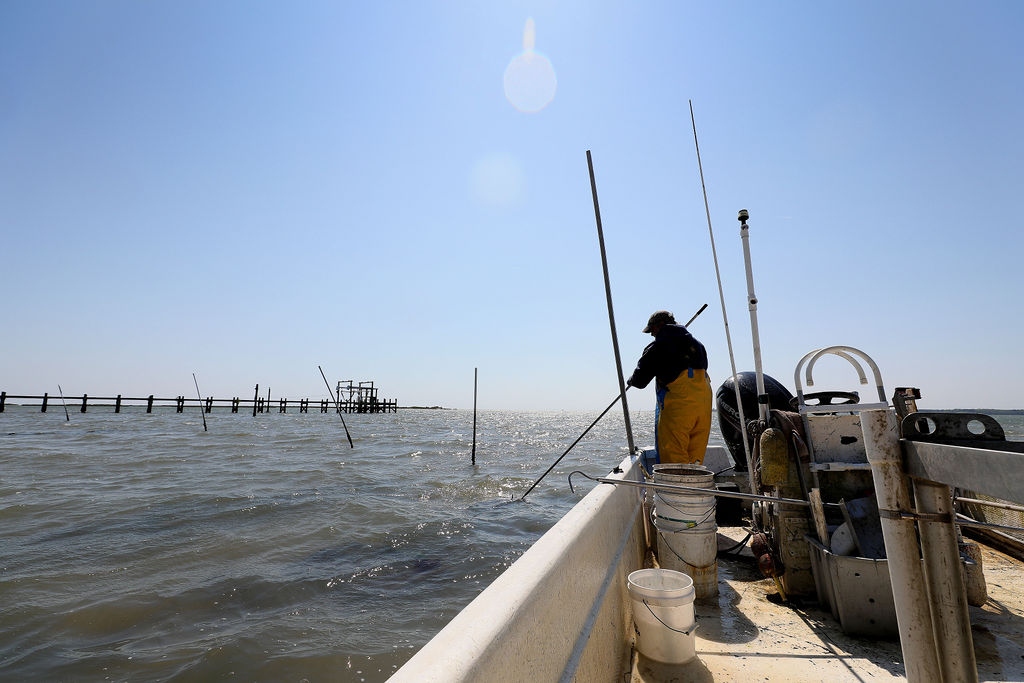 Tommy Leggett, owner of York River Oysters, works his oyster beds on the York River Friday morning April 17, 2020. Leggett has no employees and has rigged his boat with poles called spuds that hold the craft in place when he harvests oysters.